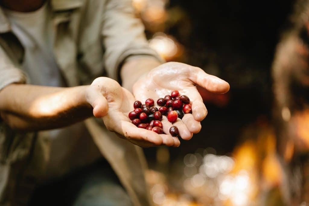 Sé más competitivo en tu plantación de café creando formularios digitales para tu plantación agrícola.